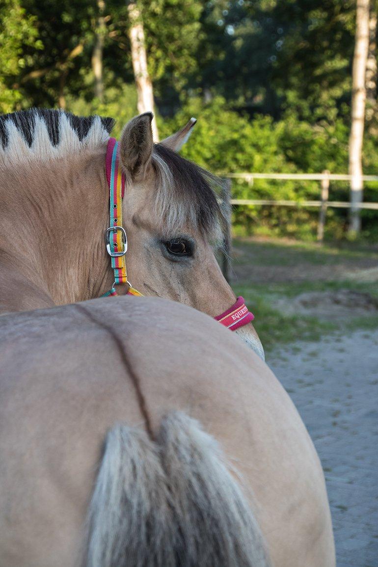 Alg3 paarden (2)