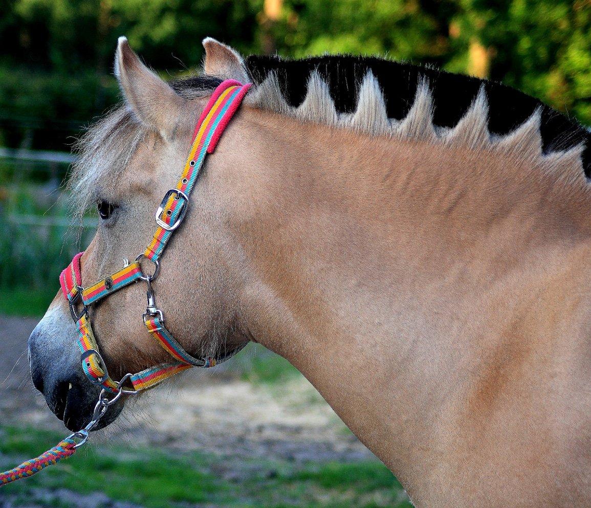 Alg3 paarden (3)