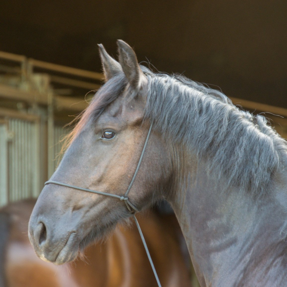 Alg3 paarden (4)