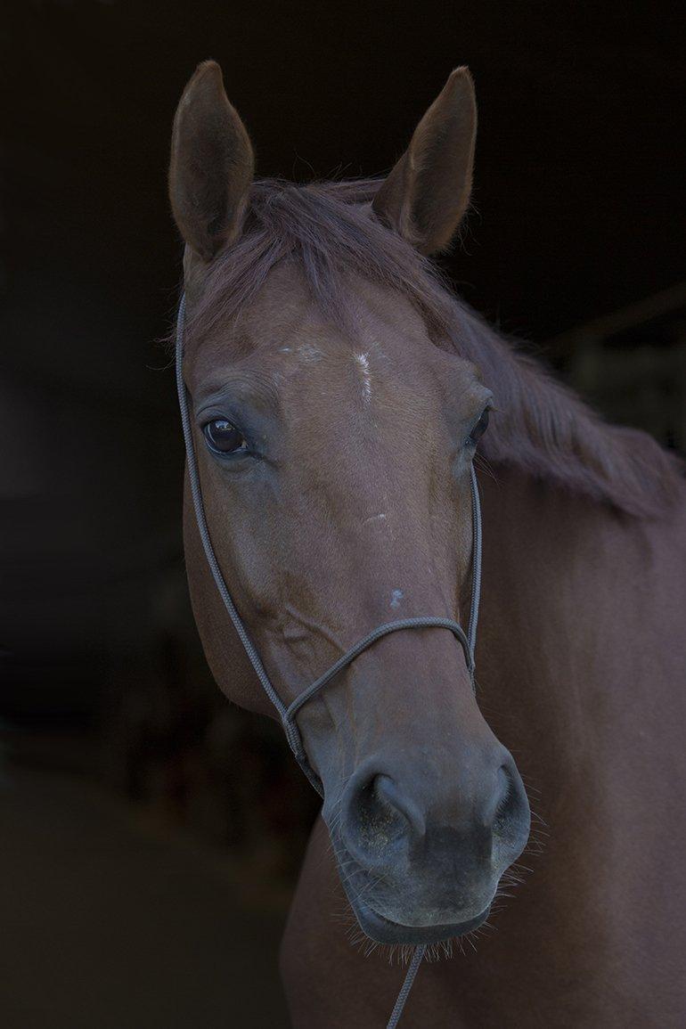 Alg3 paarden (6)