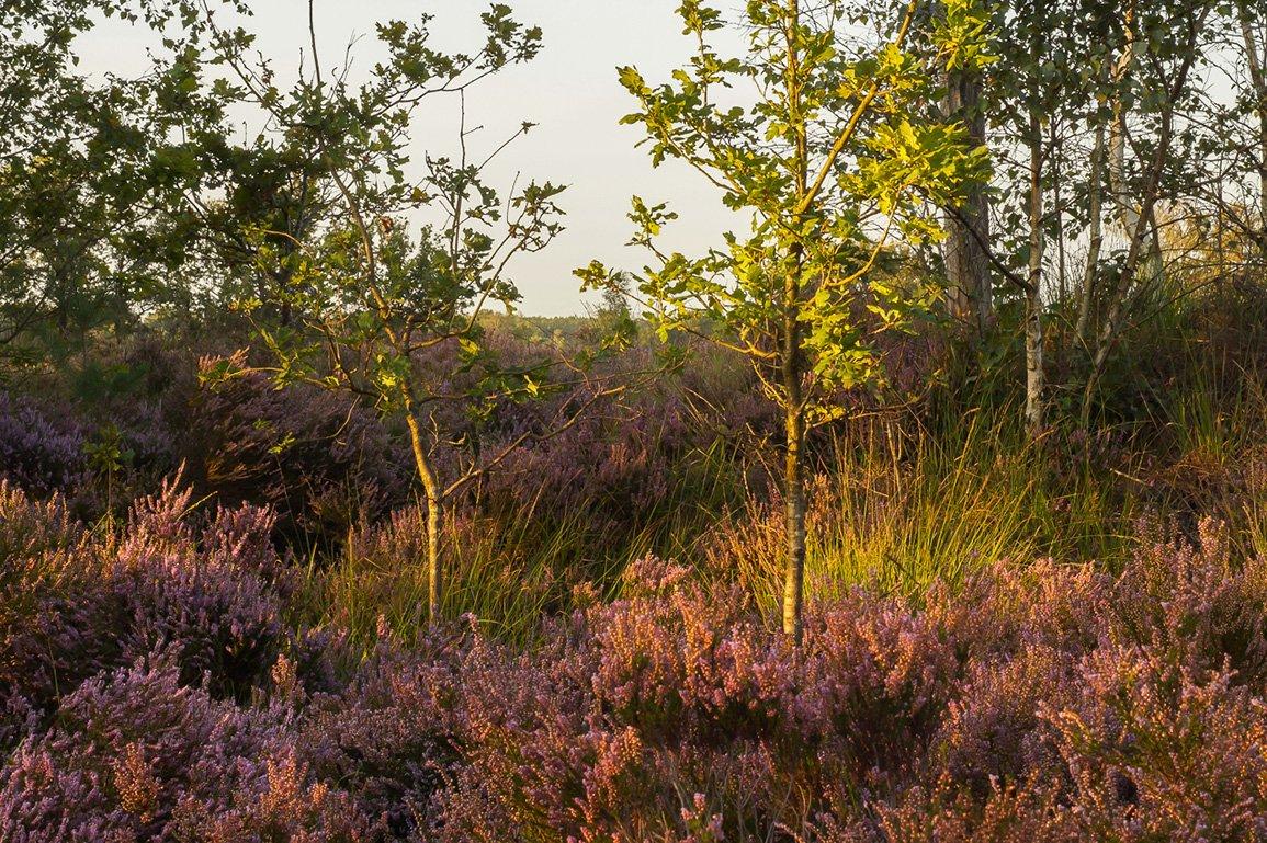 Alg 3 Oude Buissche Heide (1)