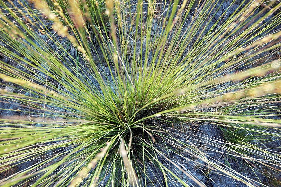 Alg 3 Oude Buissche Heide (2)