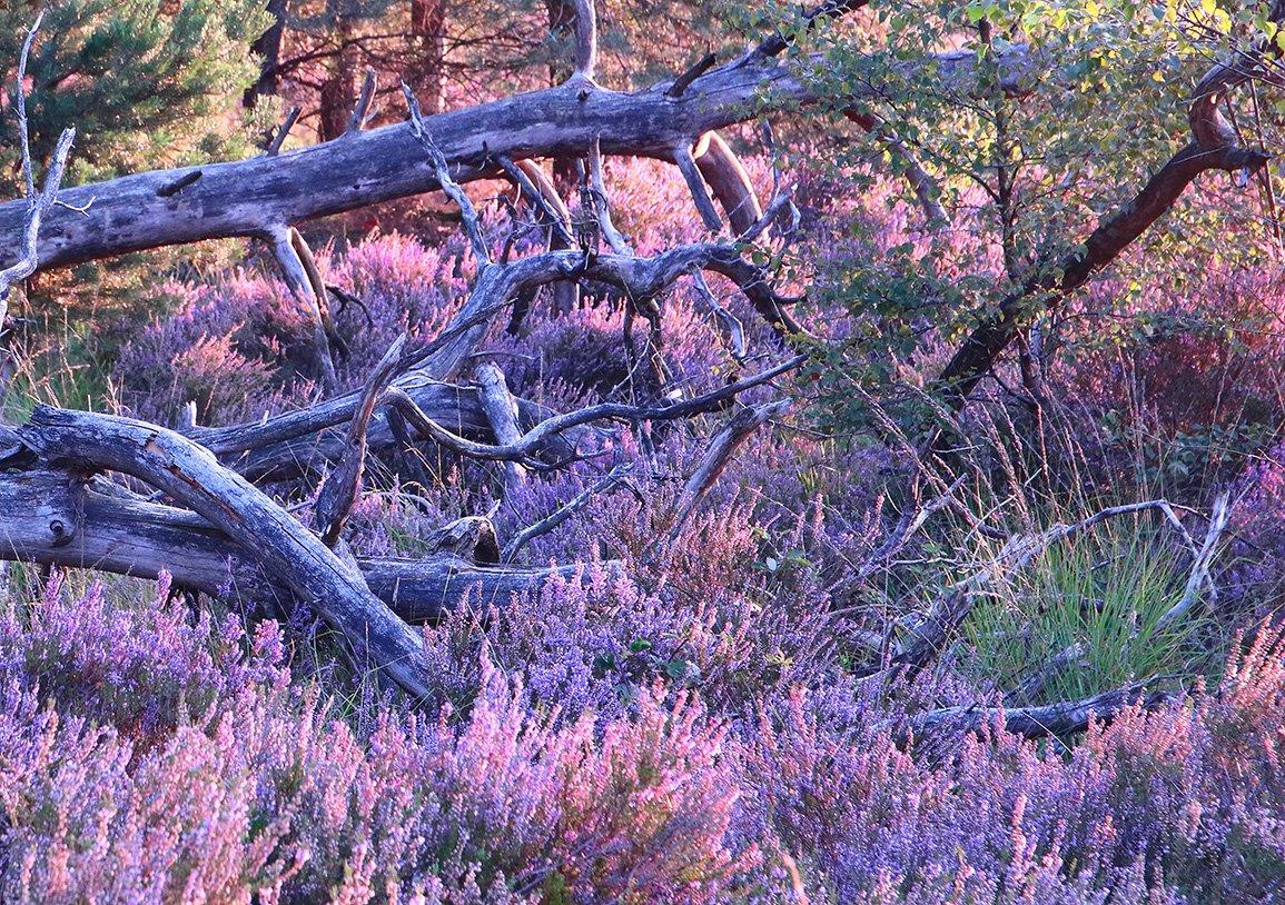 Alg 3 Oude Buissche Heide (4)