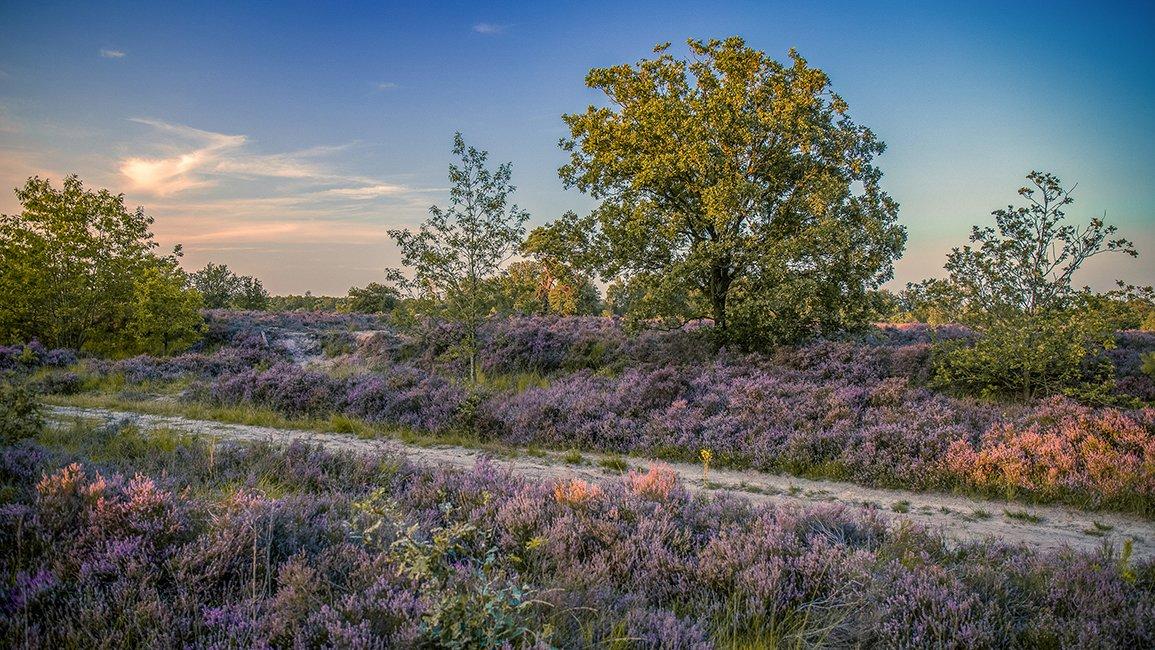 Alg 3 Oude Buissche Heide (6)