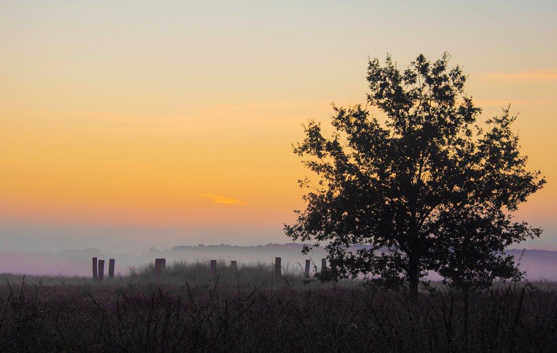 natuur 3 Regte Heide (10)