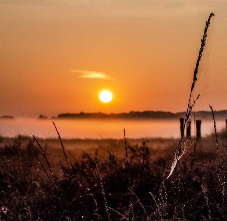 natuur 3 Regte Heide (12)