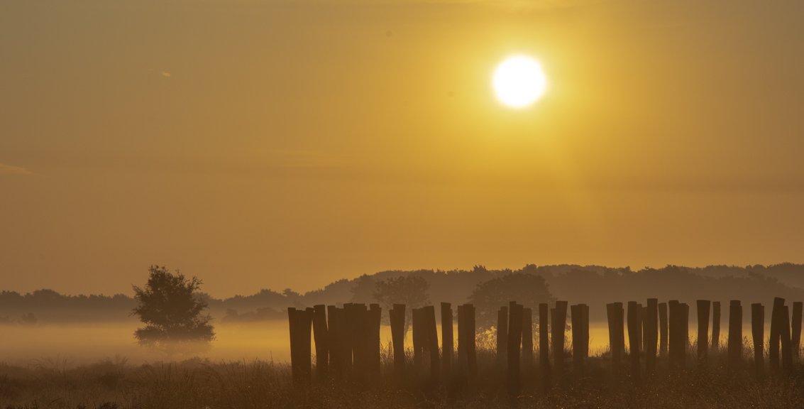 natuur 3 Regte Heide (13)