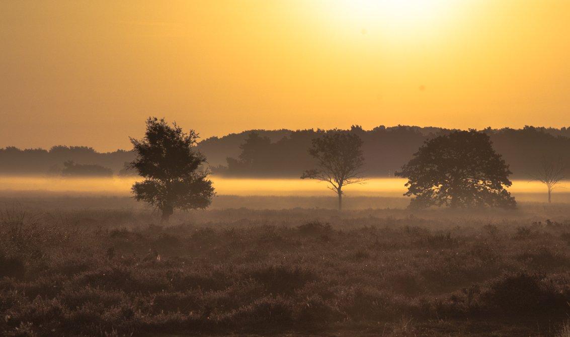 natuur 3 Regte Heide (14)