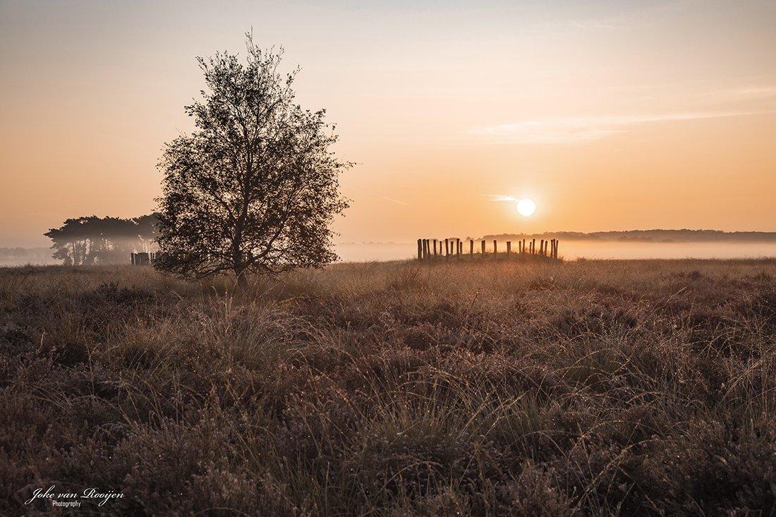 natuur 3 Regte Heide (18)