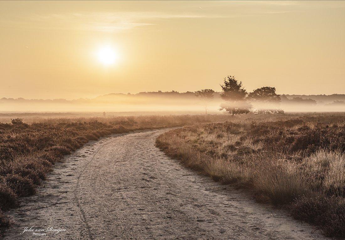 natuur 3 Regte Heide (20)