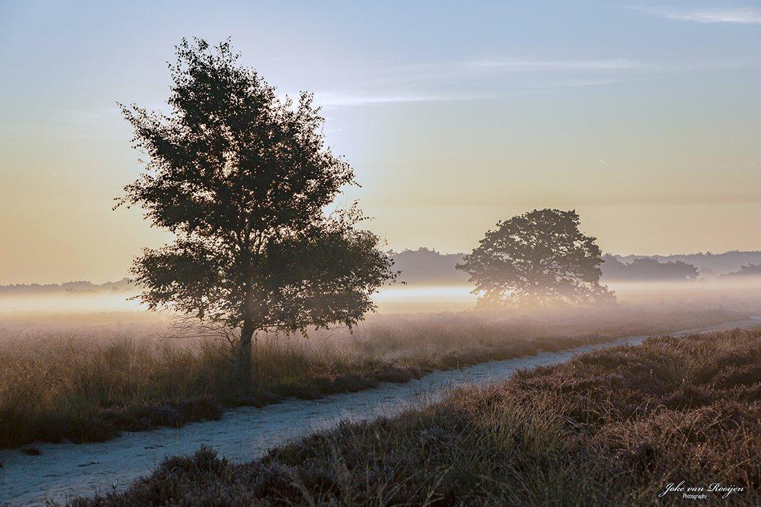 natuur 3 Regte Heide (21)