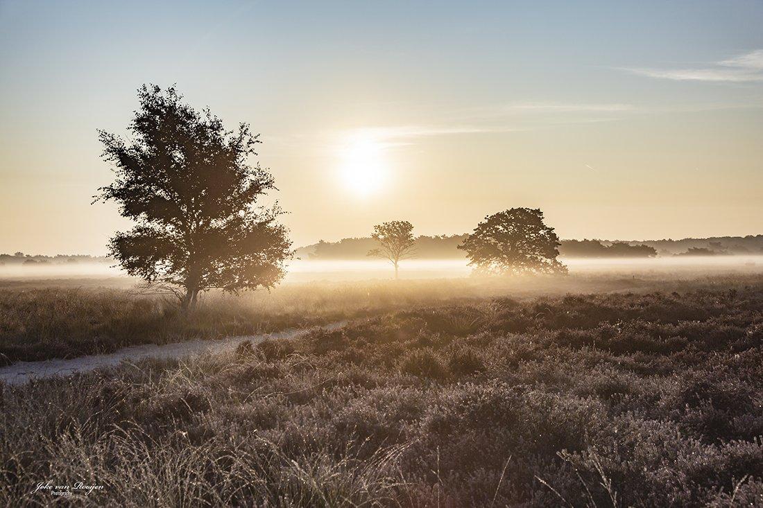natuur 3 Regte Heide (22)