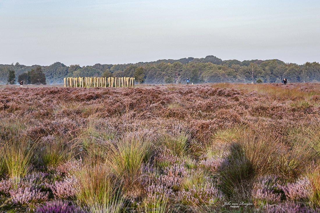 natuur 3 Regte Heide (24)