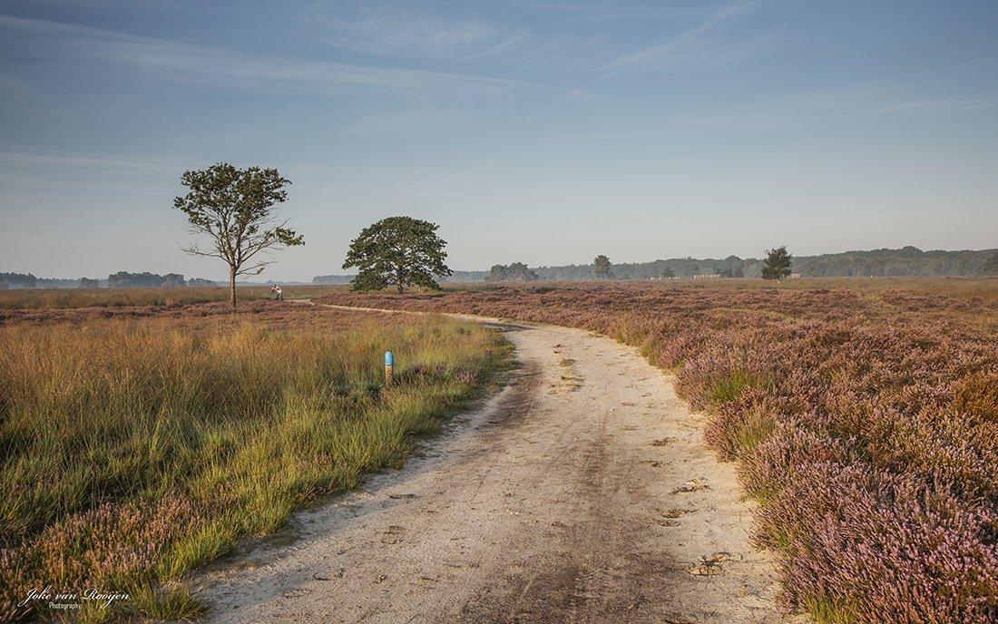 natuur 3 Regte Heide (25)