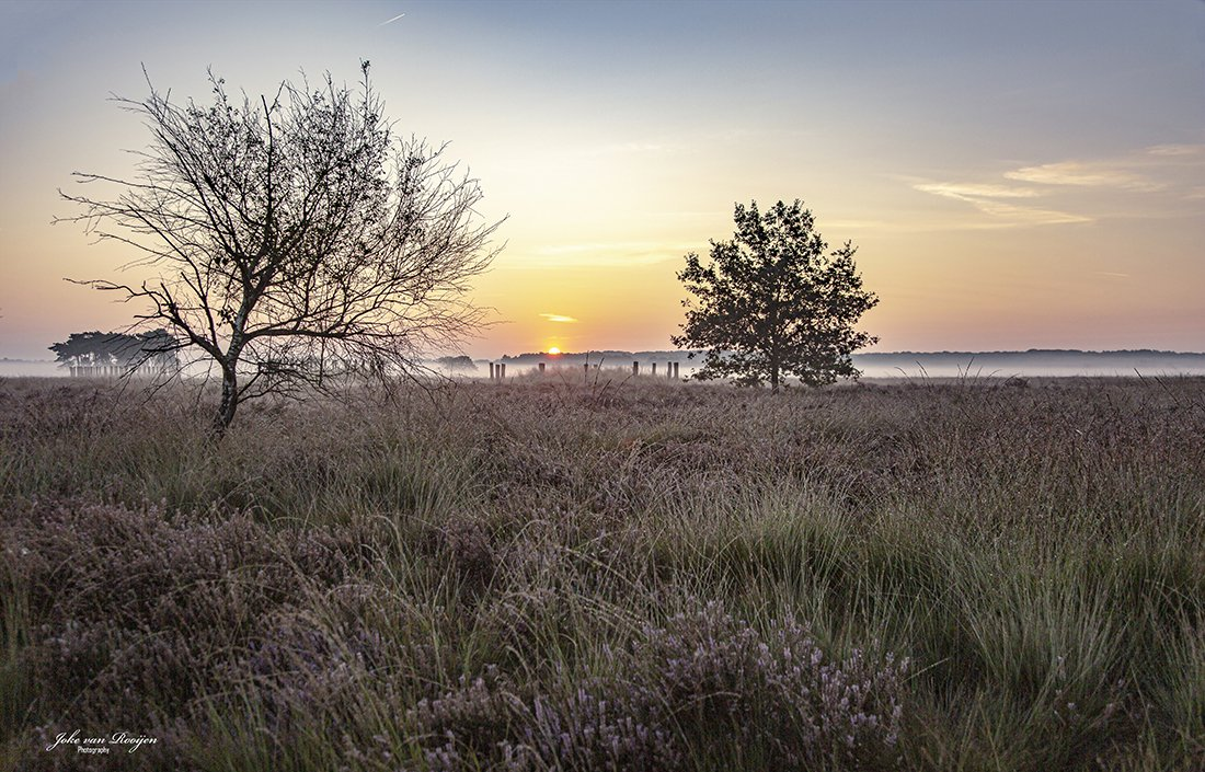 natuur 3 Regte Heide (27)