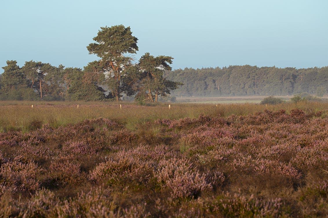 natuur 3 Regte Heide (5)