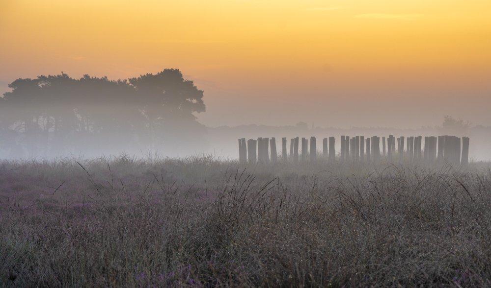 natuur 3 Regte Heide (9)
