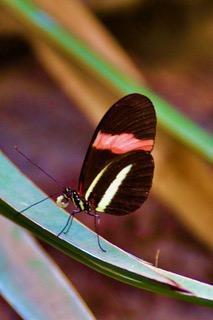 Natuur-2 vlindertuin Kwadendamme (1)