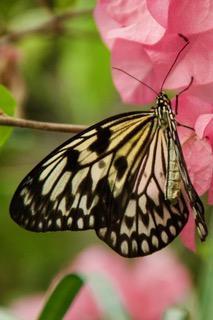 Natuur-2 vlindertuin Kwadendamme (2)