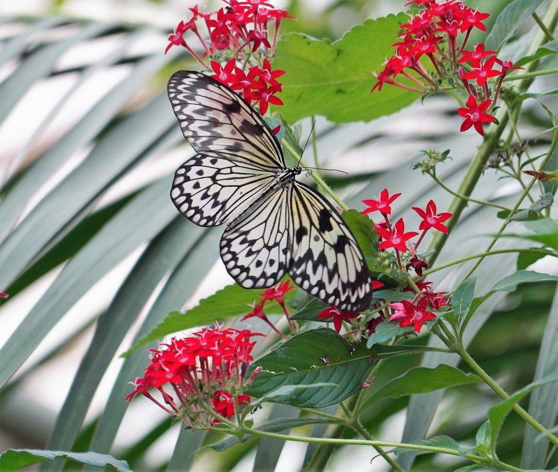 Natuur-2 vlindertuin Kwadendamme (3)