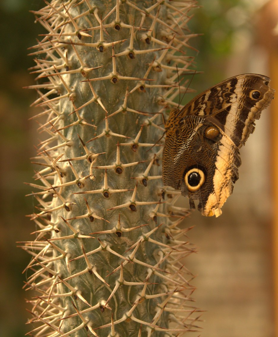 Natuur-2 vlindertuin Kwadendamme (4)