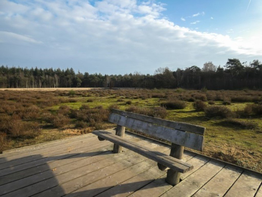 natuur 3 Galderse Heide (1)
