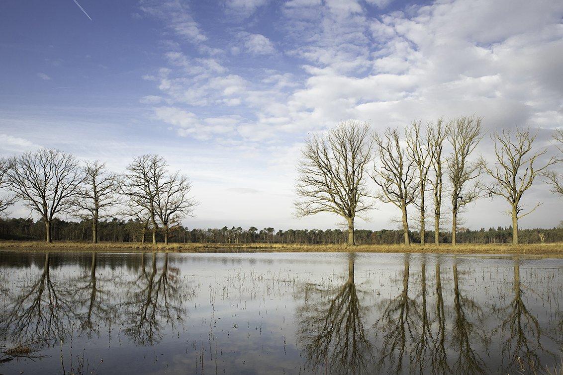 natuur 3 Galderse Heide (10)