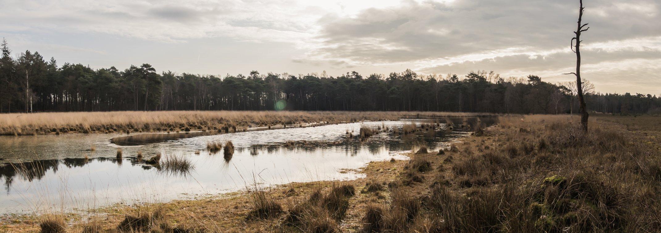 natuur 3 Galderse Heide (12)