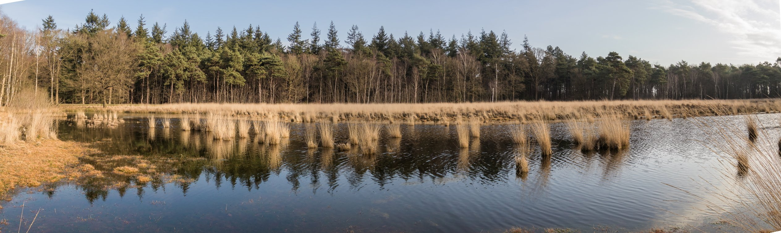 natuur 3 Galderse Heide (13)
