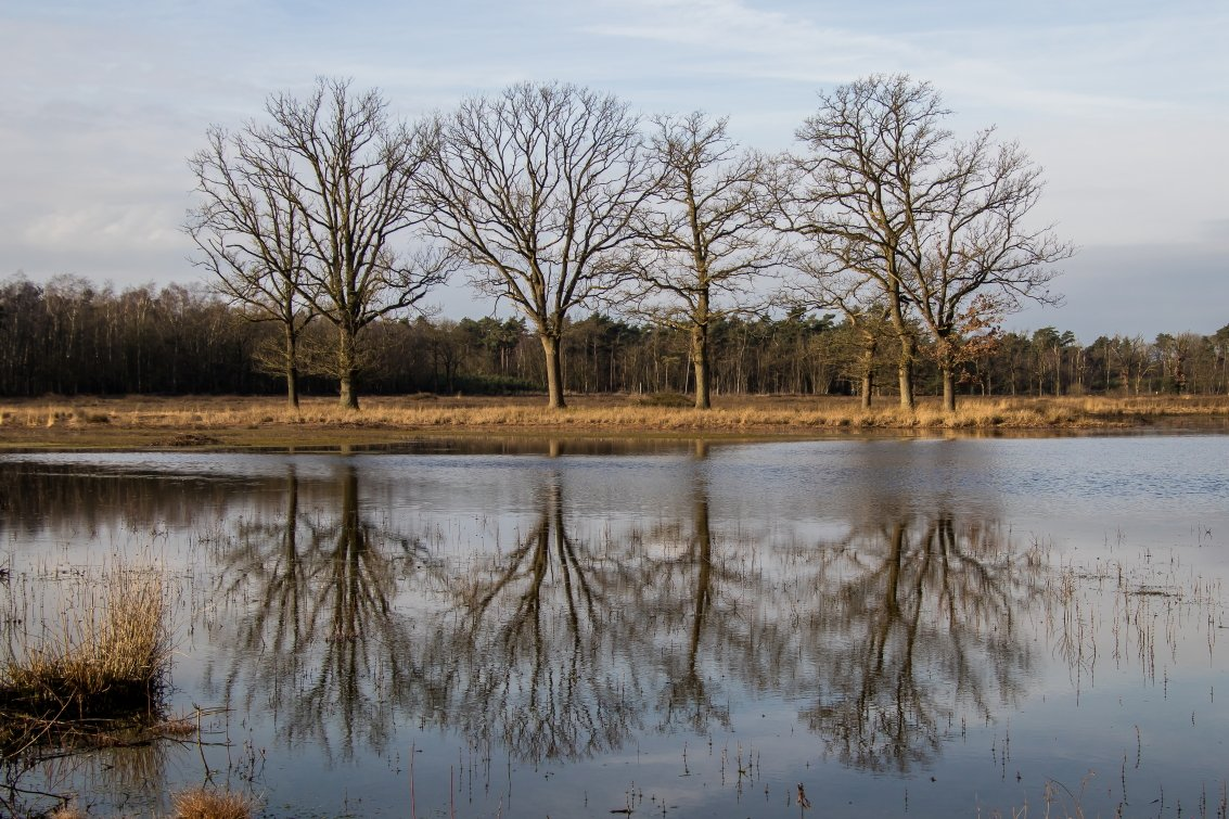 natuur 3 Galderse Heide (14)
