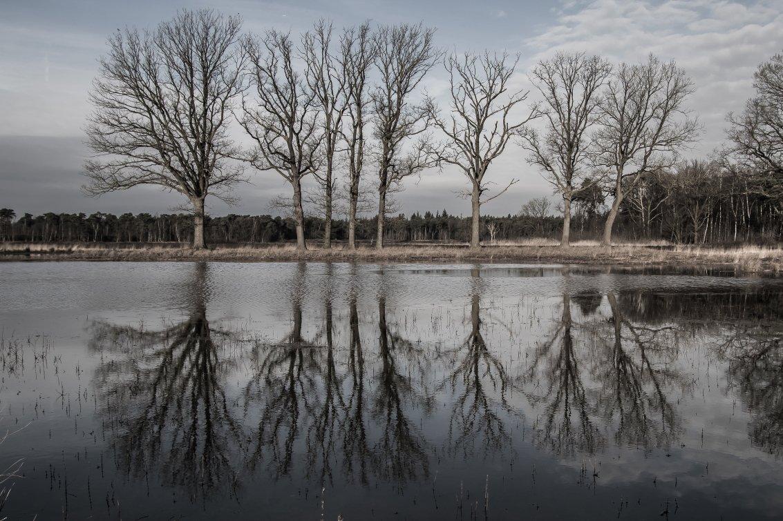 natuur 3 Galderse Heide (15)