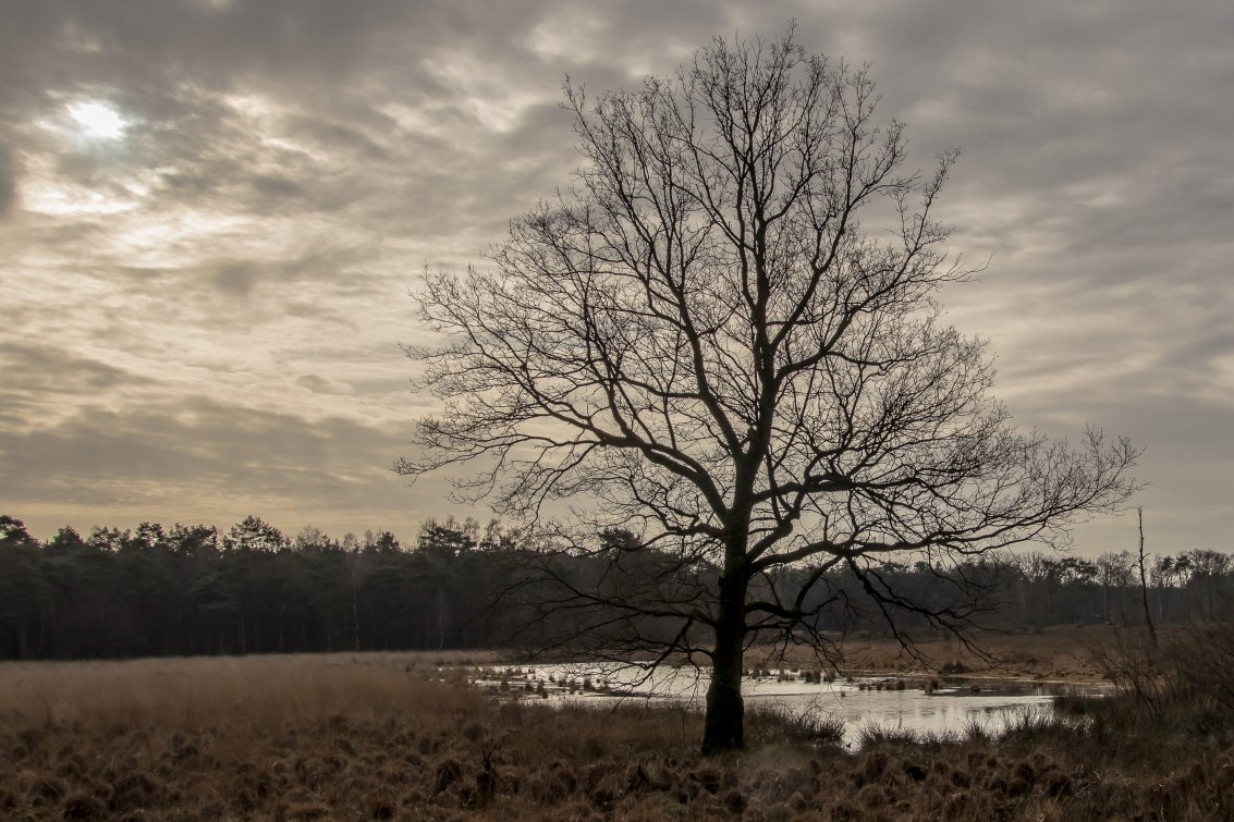 natuur 3 Galderse Heide (16)