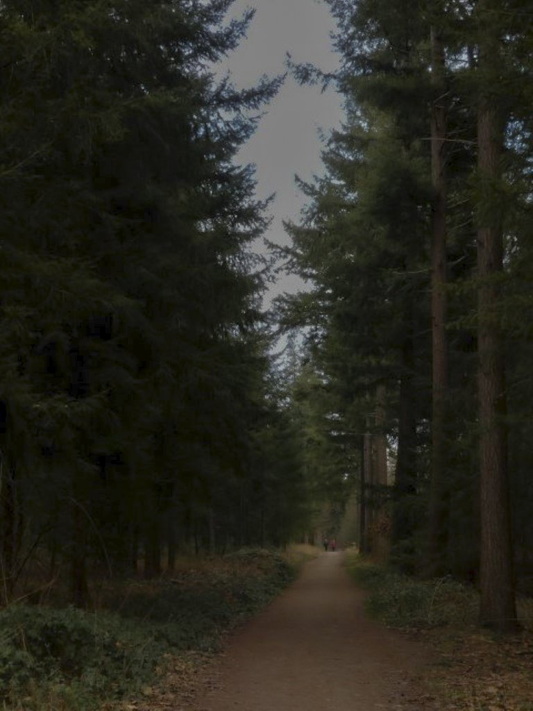 natuur 3 Galderse Heide (19-2)