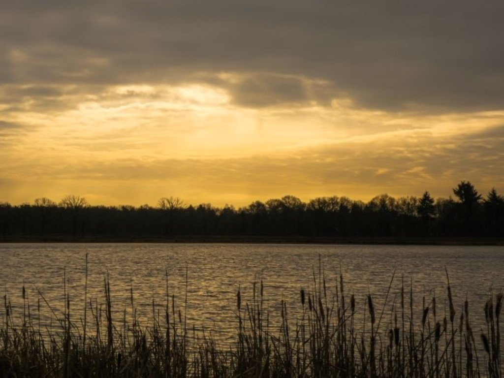 natuur 3 Galderse Heide (20)