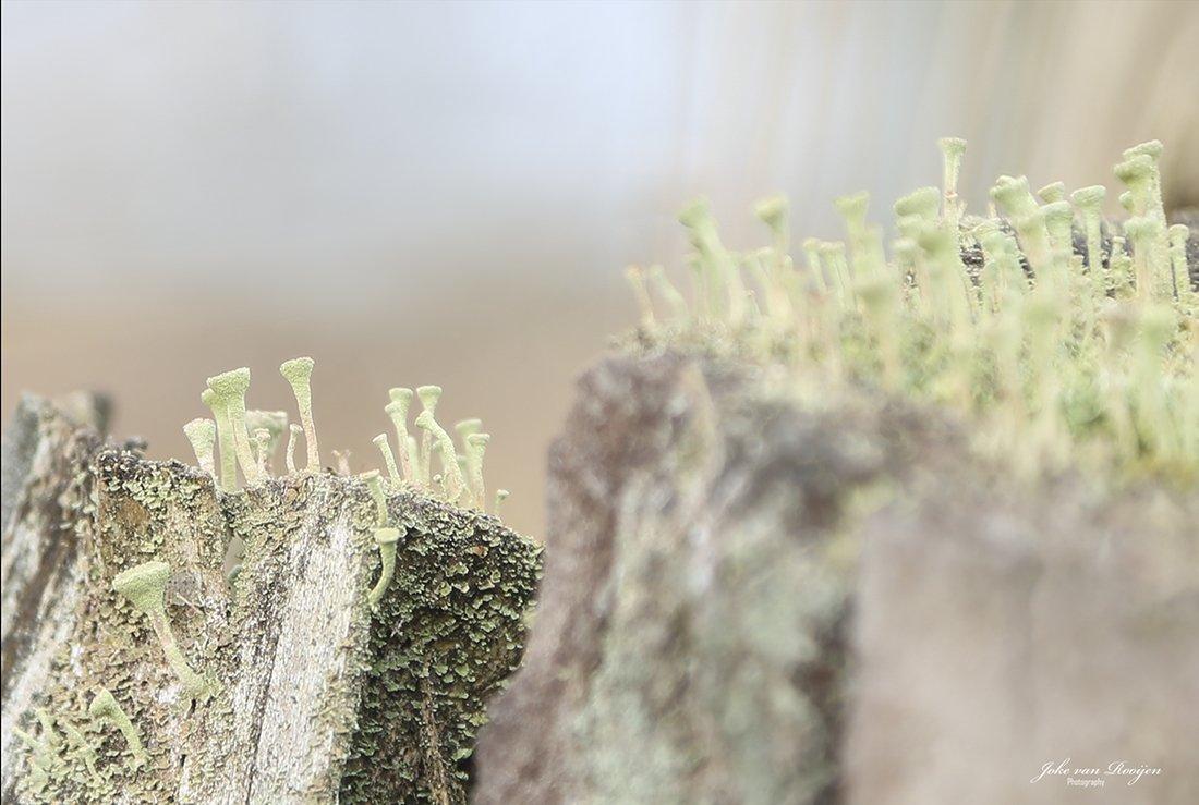 natuur 3 Galderse Heide (24)