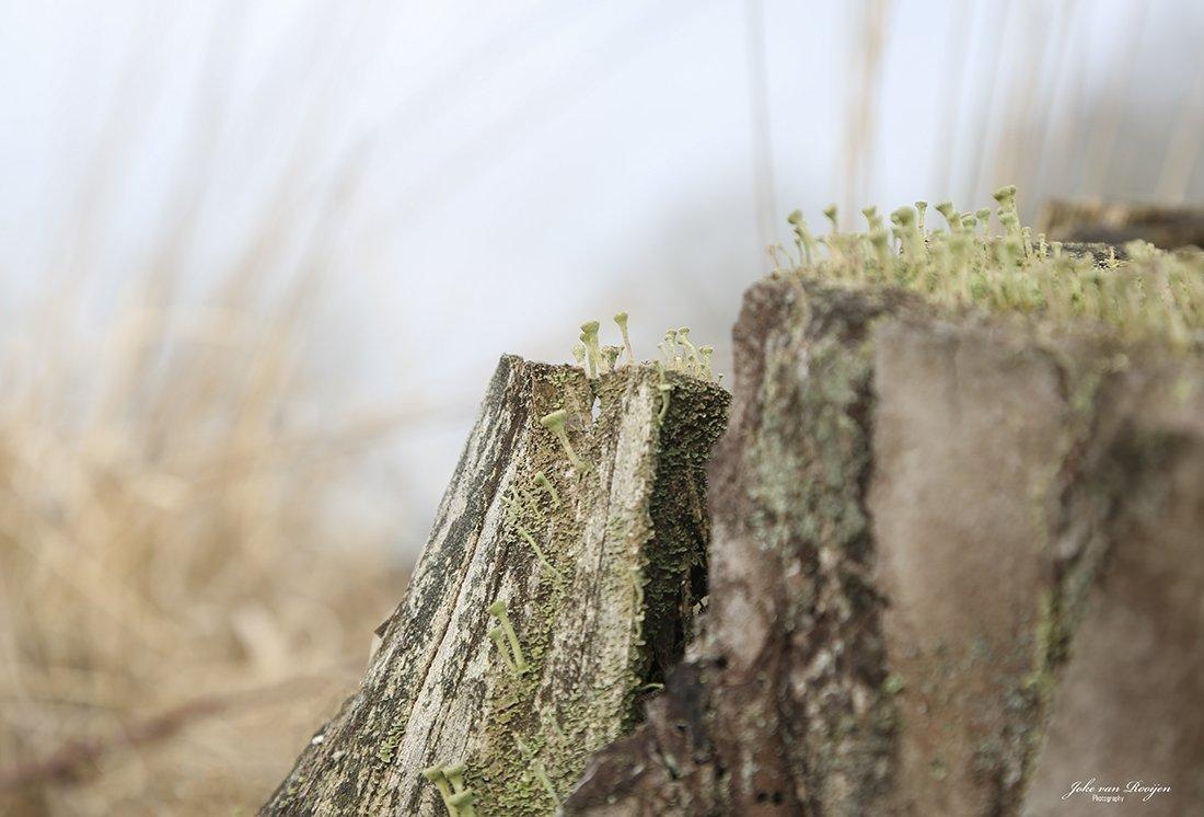natuur 3 Galderse Heide (25)