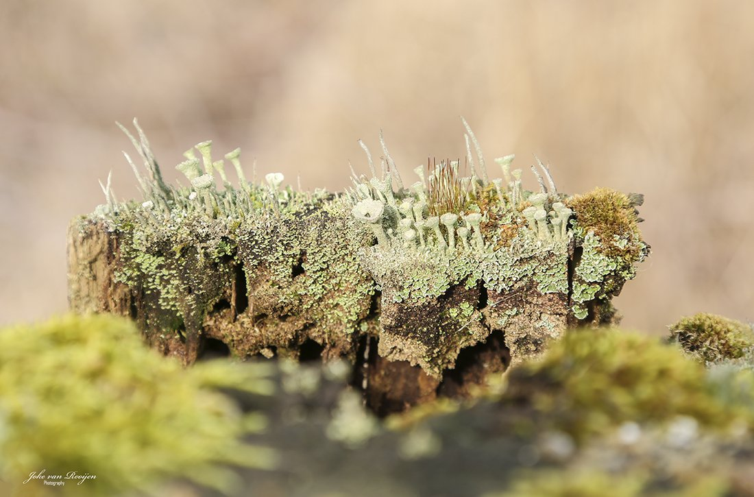 natuur 3 Galderse Heide (26)