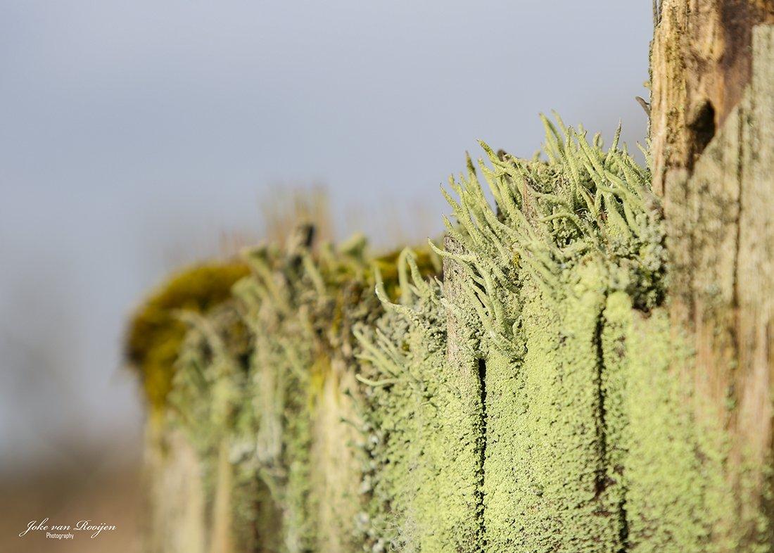 natuur 3 Galderse Heide (27)