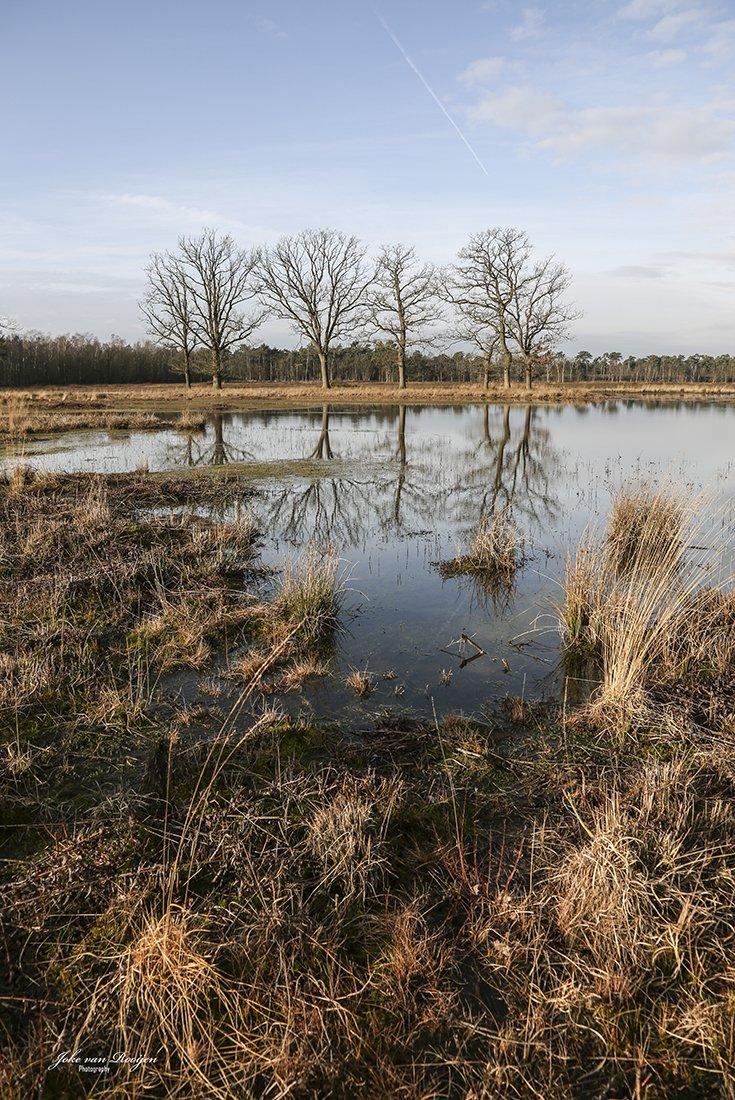 natuur 3 Galderse Heide (28)