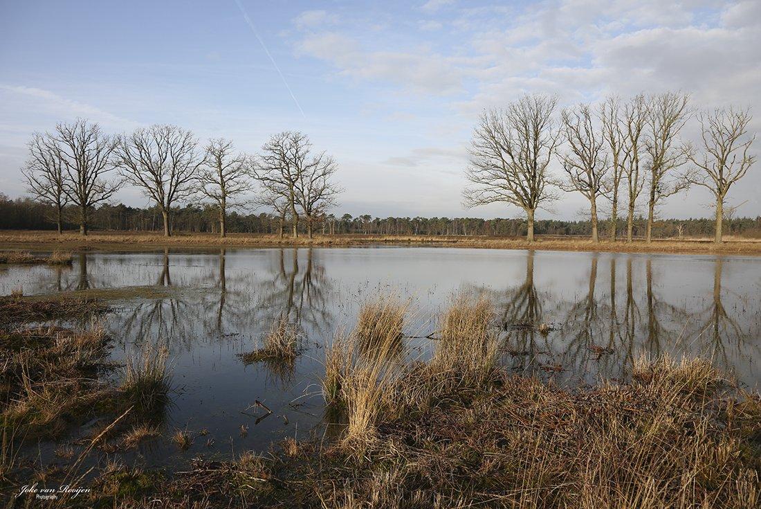 natuur 3 Galderse Heide (29)