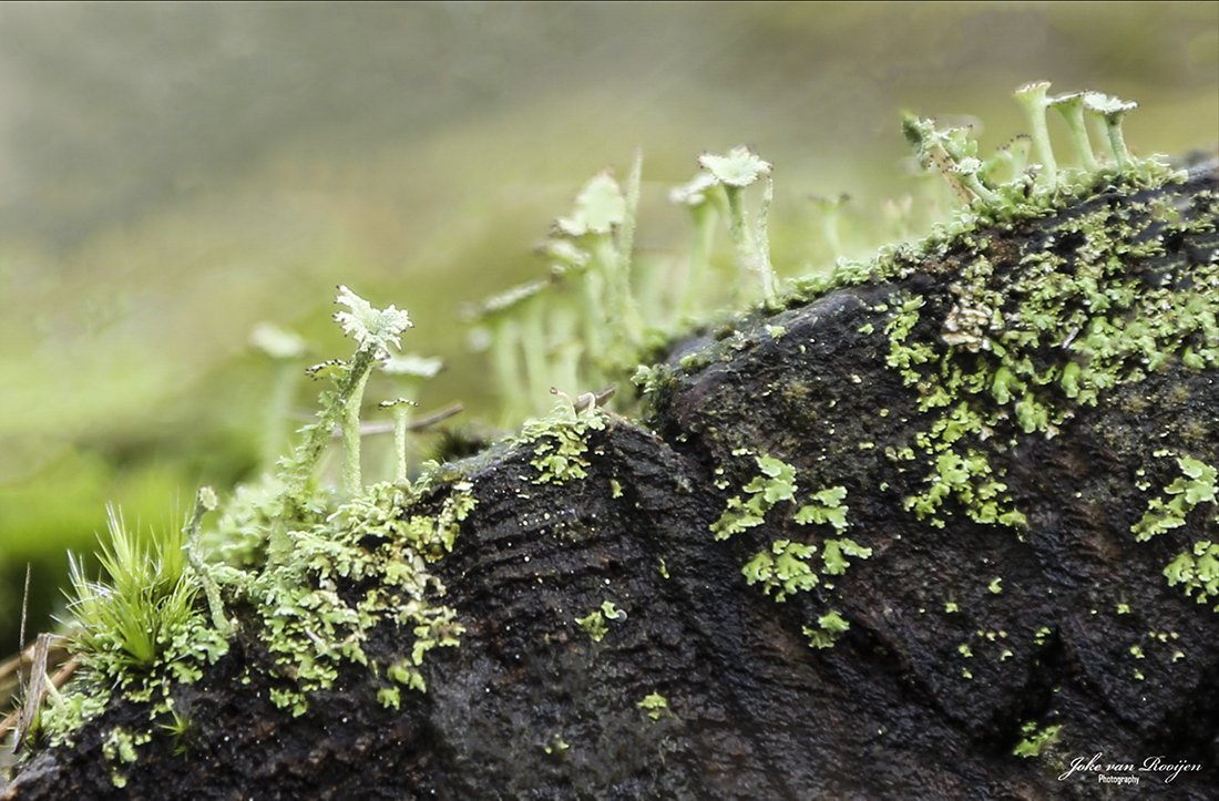 natuur 3 Galderse Heide (31)