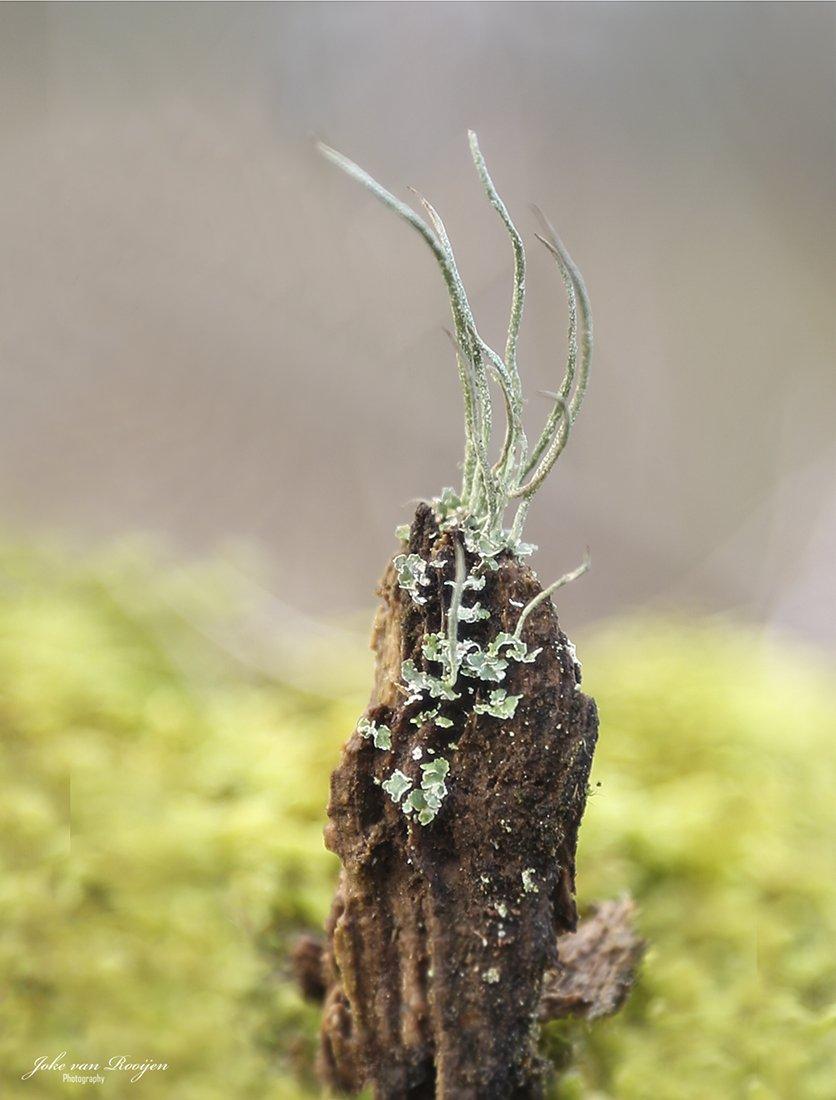 natuur 3 Galderse Heide (32)