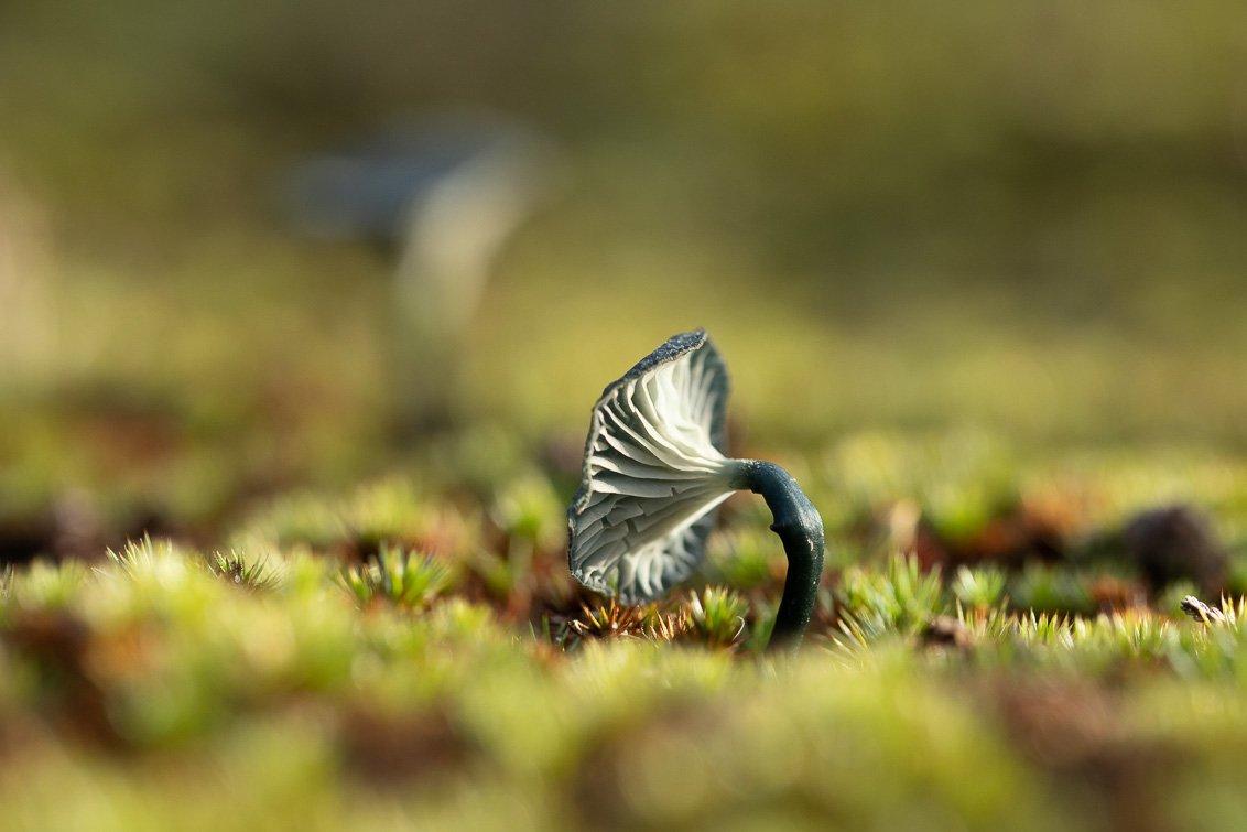 natuur 3 Galderse Heide (6)