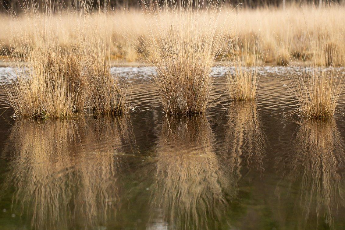 natuur 3 Galderse Heide (8)