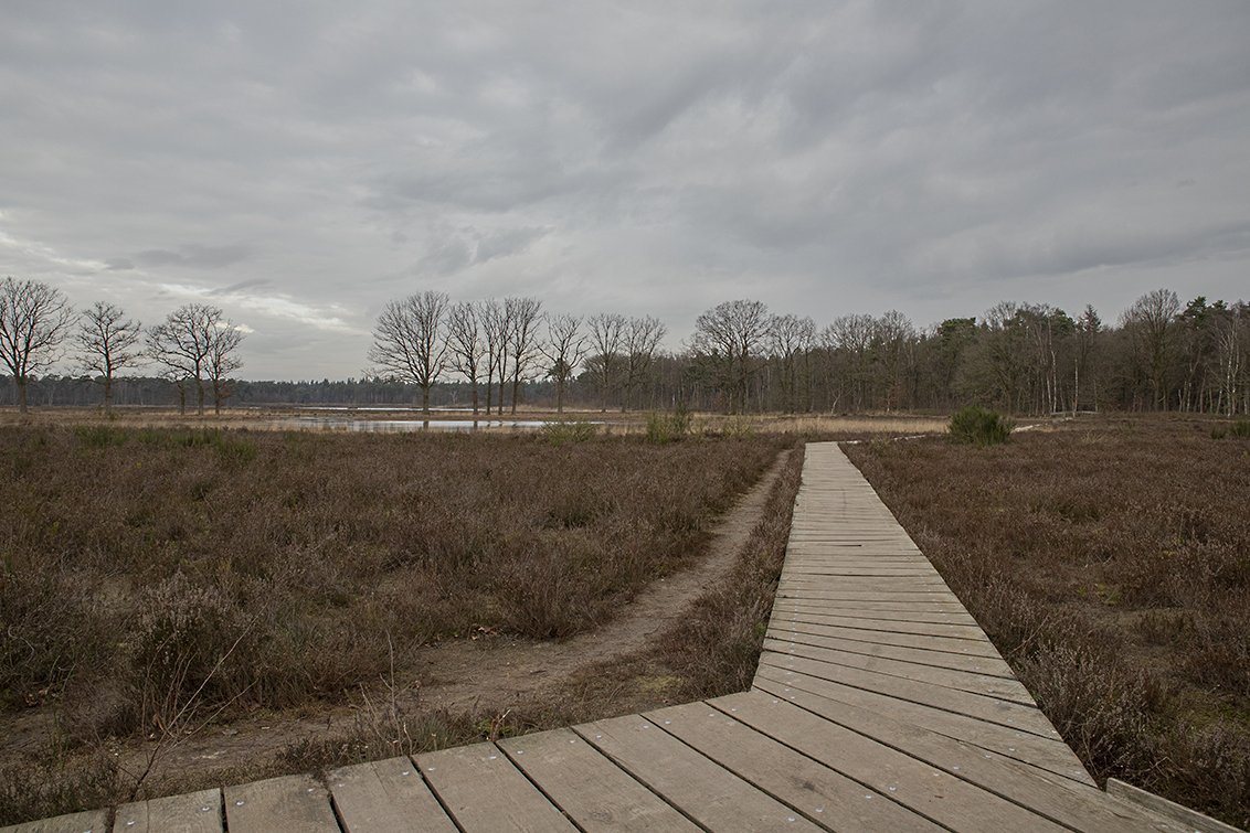 natuur 3 Galderse Heide (9)