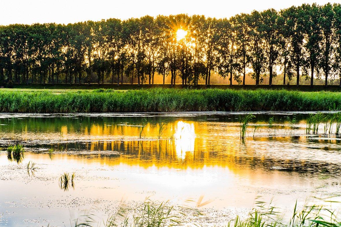 Alg 3 Biesbosch (3)