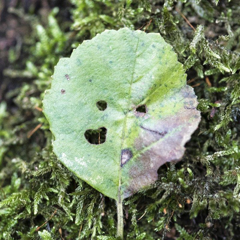 alg.2 de Berk (5)
