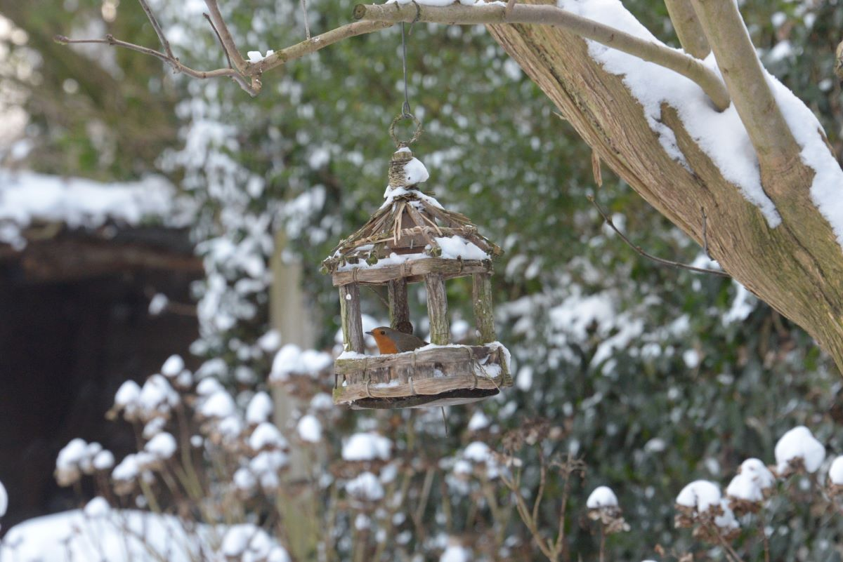 winter Fred (1)
