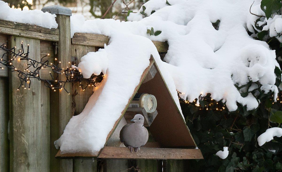 winter Helma (1)