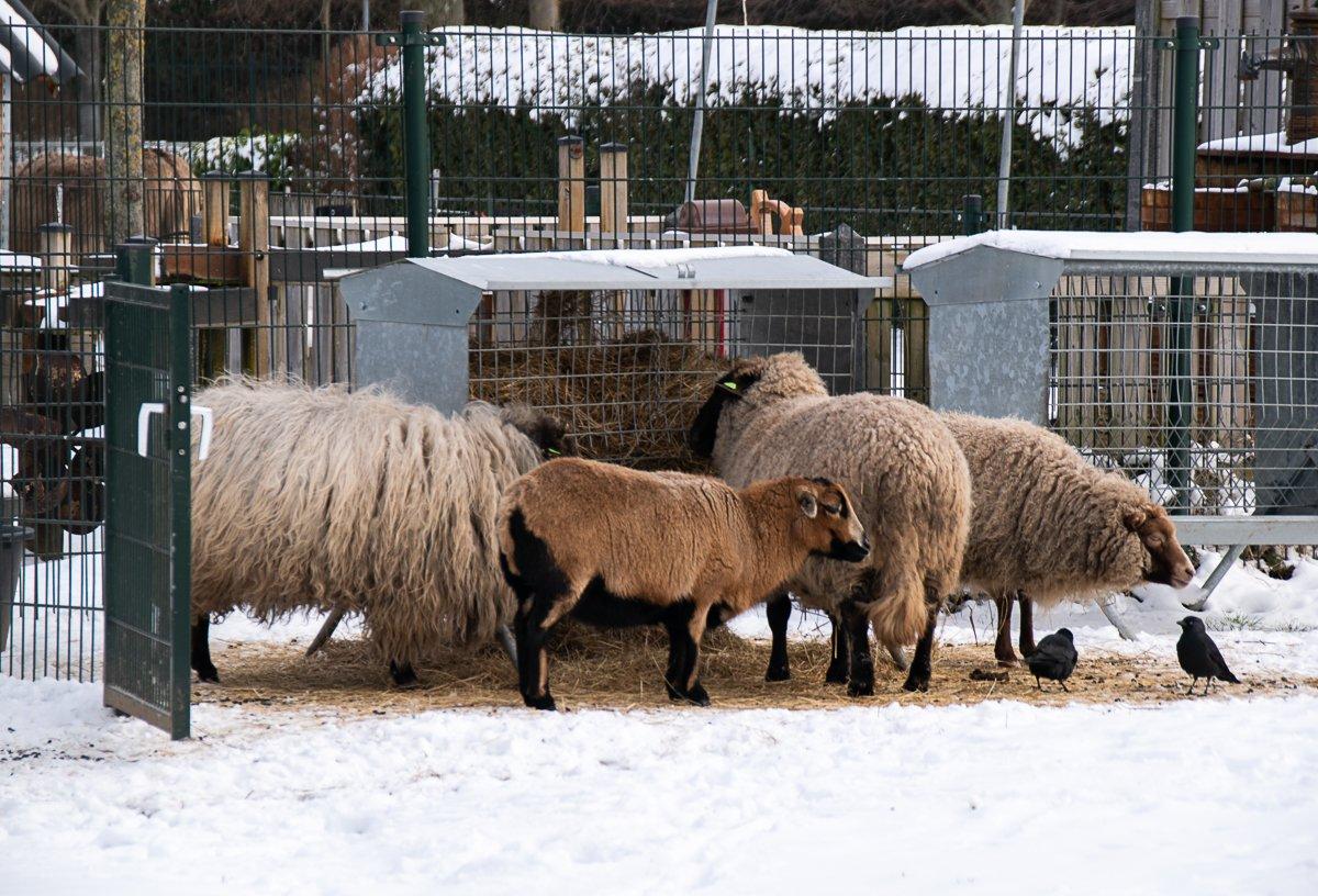 winter Helma (2)